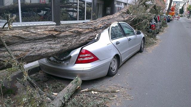 Паднало върху кола дърво